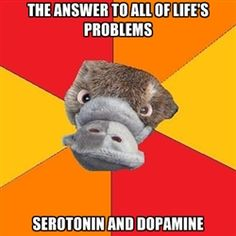 Psychology Student Platypus - The answer to all of life's problems Serotonin and Dopamine