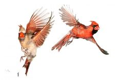 Detailed Photos of Birds in Flight