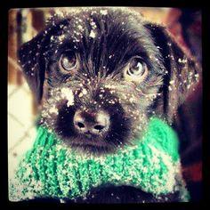 So cute!!!:)
