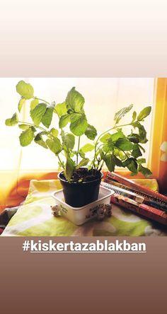 Cactus Plants, Photos, Pictures, Cacti, Photographs, Cactus