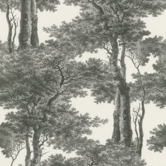 Rasch Passepartout Trees Wallpaper is a high quality wallpaper with a beautiful black and white tree silhouette design. Tree Wallpaper Black And White, Black And White Tree, White Trees, Wallpaper Paste, Wallpaper Roll, Wall Wallpaper, Grey Toile Wallpaper, Cottage Wallpaper, Tree Leaf Wallpaper