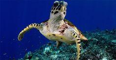 Fotógrafo brasileiro captura belezas escondidas em mares tropicais - Fotos - UOL Notícias