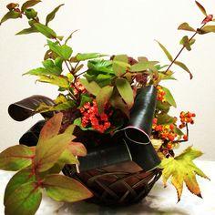 10月アレンジ フリースタイル 〈使った花材〉ツルウメモドキ:1本 /コウヨウヒペリカム:2本/ 木イチゴ:2本/秋色弁慶草:2本/三丹花:2本/ ドラセナ・カプチーノ:2本 Flower Arrangements, Planter Pots, Flowers, Floral Arrangements, Royal Icing Flowers, Flower, Florals, Floral, Blossoms