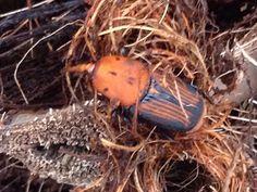 Muere una palmera municipal por el picudo en Segorbe