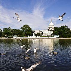 Washington DC, Where I'll be spending my Spring Break <3