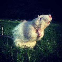 I present to you Anderson the rat