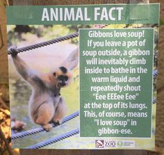Guy Visits Los Angeles Zoo, Leaves Hilarious Fake Animal Facts Everywhere - BlazePress