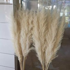 Details: Quantity: 5 PCS Head length: Length: All reeds are natural colors, with a slight yellow or tan color Please put it in the sun for a day after you receive it. Boho Wedding Flowers, Wedding Flower Arrangements, Flower Bouquet Wedding, Grass For Sale, Grass Centerpiece, Grass Decor, Tall Vases, Pampas Grass, Floral Bouquets