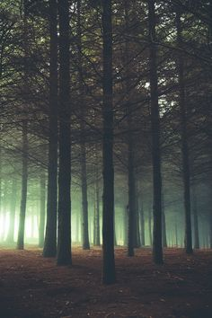 The woods are lovely, dark and deep, and I have promises yet to keep.........natureac: This blog will make you feel at peace