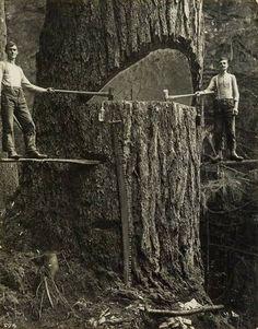 Lumberjacks. From https://www.facebook.com/groups/446418032176484/