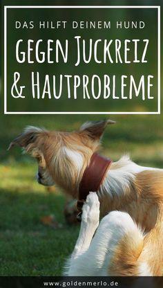 Dein Hund kratzt und juckt sich und leidet unter Hautproblemen? Erfahre hier, wie Du ihm helfen kannst! Juckreiz, Hautprobleme, schuppige und trockene Haut sind häufig auf einen Fettsäuremangel zurückzuführen. In diesem Fall von empfiehlt sich die Fütterung von Nachtkerzenöl. #hund #hautprobleme #juckreiz #jucken #allergie #fellpflege #fellwechsel || https://www.goldenmerlo.de/fast-ein-wundermittel-nachtkerzenoel-fuer-hundel/