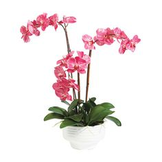 A trio of fuchsia-patterned orchid spikes creates a colorful display. Vertical bamboo stakes make this arrangement look lifelike. The arrangement is set in a white ceramic pot with ribbed detailing.