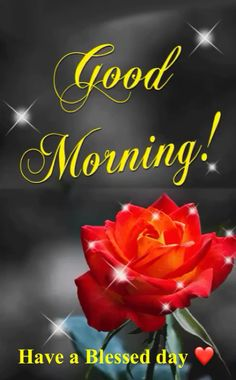 Start your day with sending beautiful Good Morning GIFs. Send Funny Morning Love GIFs, Pictures, animated morning flower GIFs to share with your friends and family members. Good Morning Thursday, Good Morning Picture, Good Night Image, Good Morning Wishes, Good Morning Good Night, Good Morning Images, Good Morning God Quotes, Happy Sunday Quotes, Good Morning Inspirational Quotes