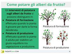 Perch� potare gli alberi da frutto, quando potarli e con quali attrezzi. Potatura tradizionale o potatura naturale?