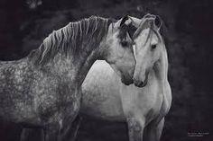 Resultado de imagen para caballo descansando