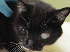 LUCKY - A1037258   ***TO BE DESTROYED 05/27/15***SUPER SWEET SENIOR WITH GREAT ...  http://nyccats.urgentpodr.org/lucky-a1037258/