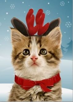 What do you mean Santa has enough reindeer?