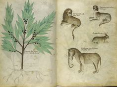 http://www.bl.uk/catalogues/illuminatedmanuscripts/record.asp?MSID=7796&CollID=9&NStart=4016