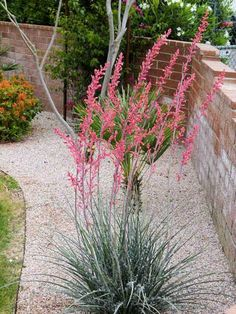 Terrasse Hesperaloe parviflora: Redflower False Yucca / Red Yucca Wallpaper Mural Tricks: How to Cho Texas Landscaping, Succulent Landscaping, Landscaping Plants, Front Yard Landscaping, Succulents Garden, Landscaping Ideas, High Desert Landscaping, Succulent Planters, Tropical Landscaping