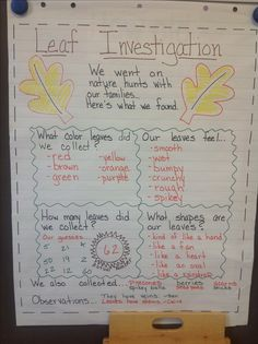 Whole Group Leaf Investigation. This could be used in a fall themed lesson plan so kids can go out and observe in a more hands on environment about what color, shape, size, etc that leaves are. Kindergarten Inquiry, Inquiry Based Learning, Preschool Science, Preschool Lessons, Preschool Classroom, Science Activities, Classroom Activities, Reggio, Tree Study