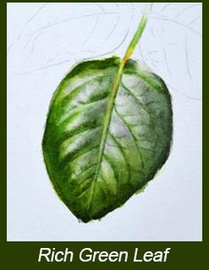 Watercolor Painting DVD How to paint leaves 5 by dorisjoa
