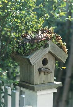 """Make your own nesting house from wood and construct a """"green"""" roof. In this case, the top of the birdhouse acts as a planter box for succulent plants. 