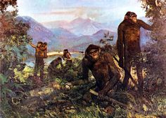 Early hominids.