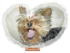 Yorkshire Terrier - Zwerge mit Löwenherz. Jetzt überall im Buchhandel.