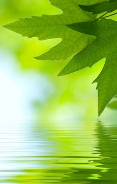 Green Reflected