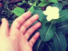 Jardim da minha tia! #saudade