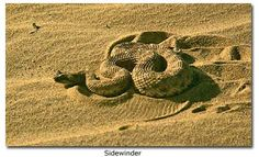 1000 Images About Snakes On Pinterest Giant Anaconda