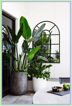 Balcony Plants interior design-#Balcony #Plants #interior #design Please Click Link To Find More Reference,,, ENJOY!! Indoor Tree Plants, Balcony Plants, Balcony Garden, Potted Plants, Trees To Plant, Balcony Ideas, Terrace Ideas, Garden Spaces, Interior Design Plants