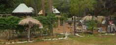Sky Harbor, Inc #sky #rehab http://ireland.nef2.com/sky-harbor-inc-sky-rehab/  # Our goal at Sky Harbor is the rescue, rehabilitation and hopeful release of Florida s native and protected wildlife. We are located at 11305 Black Walnut St, Hudson, Fl 34669 Sky Harbor was founded in 1995. We are completely non-profit and totally volunteer, making a difference for wildlife and the environment. Sky Harbor is a non-profit, 501 C 3 organization whose purpose is to make a difference for wildlife…