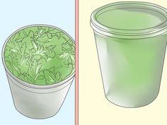 How+to+Grow+Parsley+--+via+wikiHow.com