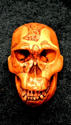 Homo habilis - OH-24 Homo Habilis, Paleo, Skull, Fossils, Beach Wrap, Skulls, Sugar Skull, Paleo Food