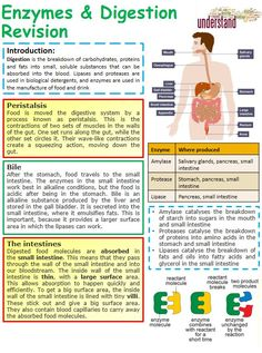 Gcse Biology Revision, Igcse Biology, Gcse Physics, Study Biology, Biology Lessons, Science Biology, Teaching Biology, Life Science, Ap Biology