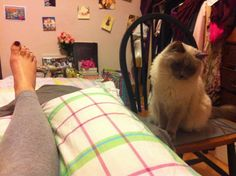 Patiently watching over My Lady. Read about it on my blog www.angelicatales.wordpress.com >^.^