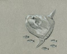 mola mola watercolor
