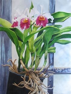 Orchids White Pink in Greenhouse Karen Benco Watercolor