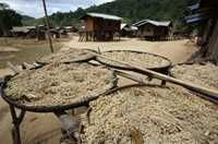 Unhusked rice and another crop are drying in the sun in a village near Sekong, Laos. Photo by Jim Holmes for AusAID