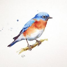 Watercolor Bluebird - Original Bird Painting 7 4/5 x 7 4/5 inches