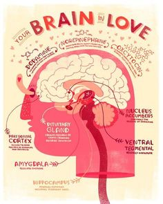 Your Brain in Love Anatomy Poster is part of Brain anatomy - Some say the heart is the organ of love, but it is most definitely the brain! Give the one you love who loves science this unique print for valentines day! Brain Anatomy, Anatomy Art, Anatomy And Physiology, Human Anatomy, Heart Anatomy, Body Systems, Medicine, Mindfulness, Teaching