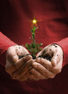 SEASONAL – CHRISTMAS – the magic of the holiday makes another appearance in a brilliant quest to find the perfect christmas tree.