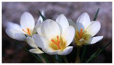 творческая мастерская, студия лепки, реалистичная флористика, флористика, цветок-брошь