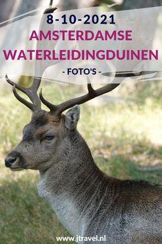 Ik maakte een wandeling in de Amsterdamse Waterleidingduinen. Het is burltijd voor de damherten. Helaas heb ik dit keer geen gevechten gezien maar wel een aantal burlende damherten en verder een mooie natuur, paddenstoelen en libelles. Mijn foto's zie je hier. Kijk je mee? #awd #damhert #libelle #wandelen #hiken #natuur #paddenstoelen #jtravel #jtravelblog #fotos