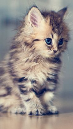 sweet face kitten!