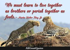 We must learn to live together as brothers or perish together as fools. Martin Luther King, Jr.  http://bit.ly/2b1W5j1