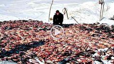 Не рыбалка а приколы Ловля рыбы руками и даже лопатой на зимней рыбалке #3