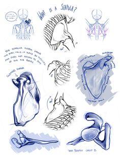 fryingtoilet: Bone portfolio for LD class from. - Fuck Yeah Art Tips! Arm Anatomy, Anatomy Bones, Human Body Anatomy, Anatomy Art, Anatomy Sketches, Anatomy Drawing, Drawing Sketches, Drawings, Anatomy Reference