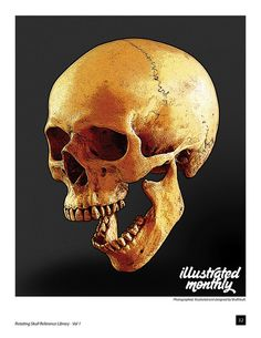 skull reference - Google Search